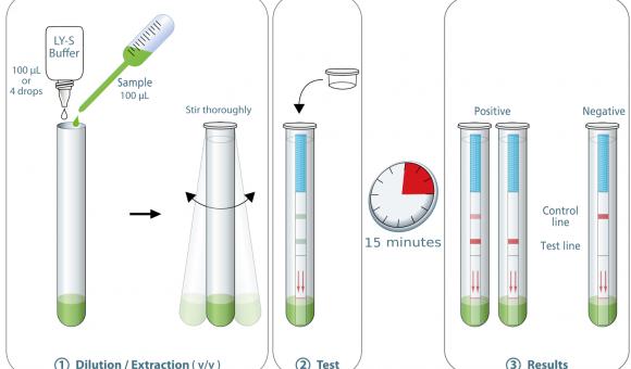 Proceso de aplicación para la prueba COVID-19 Ag Respi-Strip
